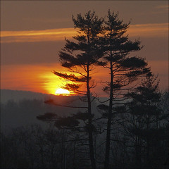 Laurentian Jack Pine Sunrise (NaPix -- (Time out)) Tags: morning november two 3 canada fog pine forest sunrise landscape jack four one 1 quebec explore story sillouette info laurentian 500x500 lifestory firstquality explored explore1 explore4 imagepoetryimageposie napix vosplusbellesphotos manythankstomyfriendsandcontacts