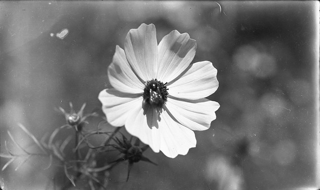 1910s - Flower and Bee
