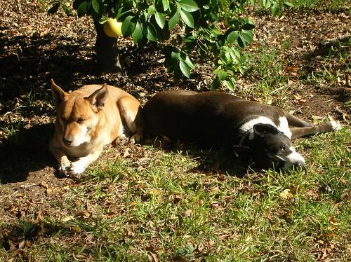 Rocky & Java 11-2008