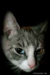 ...GIVE ME TREATS OR ELSE.......   ..TKR FLICKR (**THAT KID RICH**) Tags: nyc cats ny eyes treats evil ears kittens whiskers explore marbles tkr kissablekat bestofcats thatkidrich tkrphotography adorablecatsandkittens