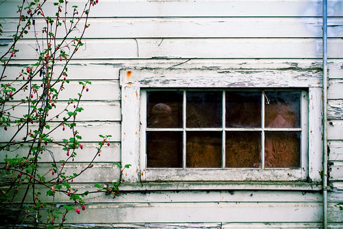 An old window and spring plant in Stayton Oregon