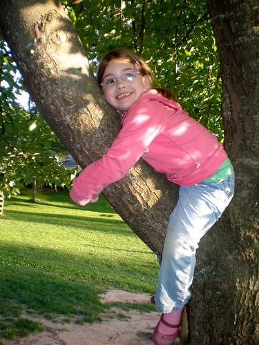 Cricket in a tree