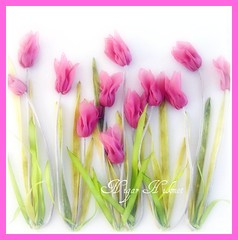RBBON TULPS (nigarhikmet) Tags: pink flowers art tulips handmade embroidery trkiye tulip lint bordados borduren stumpwork ribbonembroidery sakarya supershot ribbonwork ribbonflowers mywinners akyaz kurdele trklalesi sulampita tlip nigarhikmet bndchenstickerei kurdelenakisi kurdelanakisi ribbontulips lintborduren kurdelenak lintwerk broderieruban lintborduurwerk zijdelintborduren bordurenmetlintgaren szalaghmzs   kaspinassiuvinjimas fitabordado bordadodecinta  sulamanpita   nastroricamo   kurdelelale kurdeleii tlips