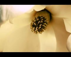"""liberatemi il cuore ( Alda Merini ) (Valentina R. """"tillo980"""") Tags: estremità"""