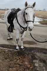 DSC_0408 (2) (KLMP) Tags: old horses cemetery infantry arlington last us 3d ride fort national karin myer platoon mayberry regiment markert ciasson
