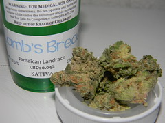 Lamb's Bread (Rainier Ale 16oz) Tags: oregon bread 420 patient medical lambs marijuana sativa strain ommp vision:outdoor=0777