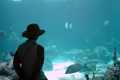 Atlantis Aquarium (StGrundy) Tags: blue people water atlantis bahamas nasau goldstaraward oceansofwondercontest