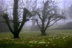 Foggy morning (hoffnungwell) Tags: flower tree fog switzerland mariastein brillianteyejewel