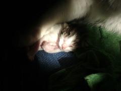 kittens!!! 018