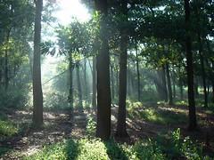 hutan galih