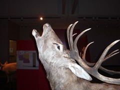Deer baying at moon? (Kevin C.) Tags: animals museum fake fatal attractions exhibt