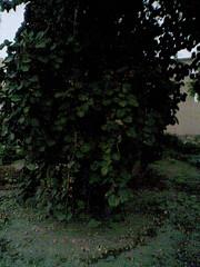 صور من المزرعة (•°o.O قطرات الامل O.o°•) Tags: المزرعة