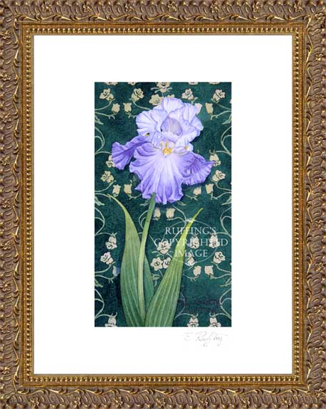 Blue and White Iris by Elizabeth Ruffing Framed Print