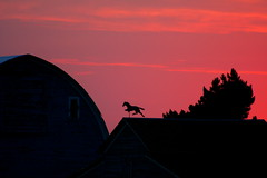 Weathervane at Dusk (jkeenan501) Tags: sunset horse weather barn evening washington dusk sunsets running oldbarns weathervane vane westcoast soe sunsetting ritzville oldbarn weathervanes inwashington horserunning ofwashington headingtothebarn puplesky weatahervanes