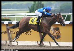 Music Note wins the Mother Goose (Spruceton Spook) Tags: horses belmont horseracing mothergoose musicnote javiercastellano saeedbinsuroor