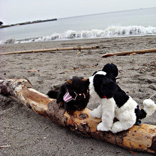 Puppy kisses are the best even on the beach! (by martian cat)
