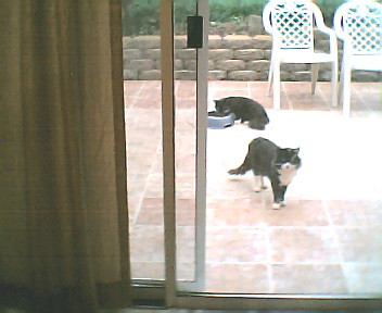 our pet feral cats who hate this lower calorie food for hotter weather