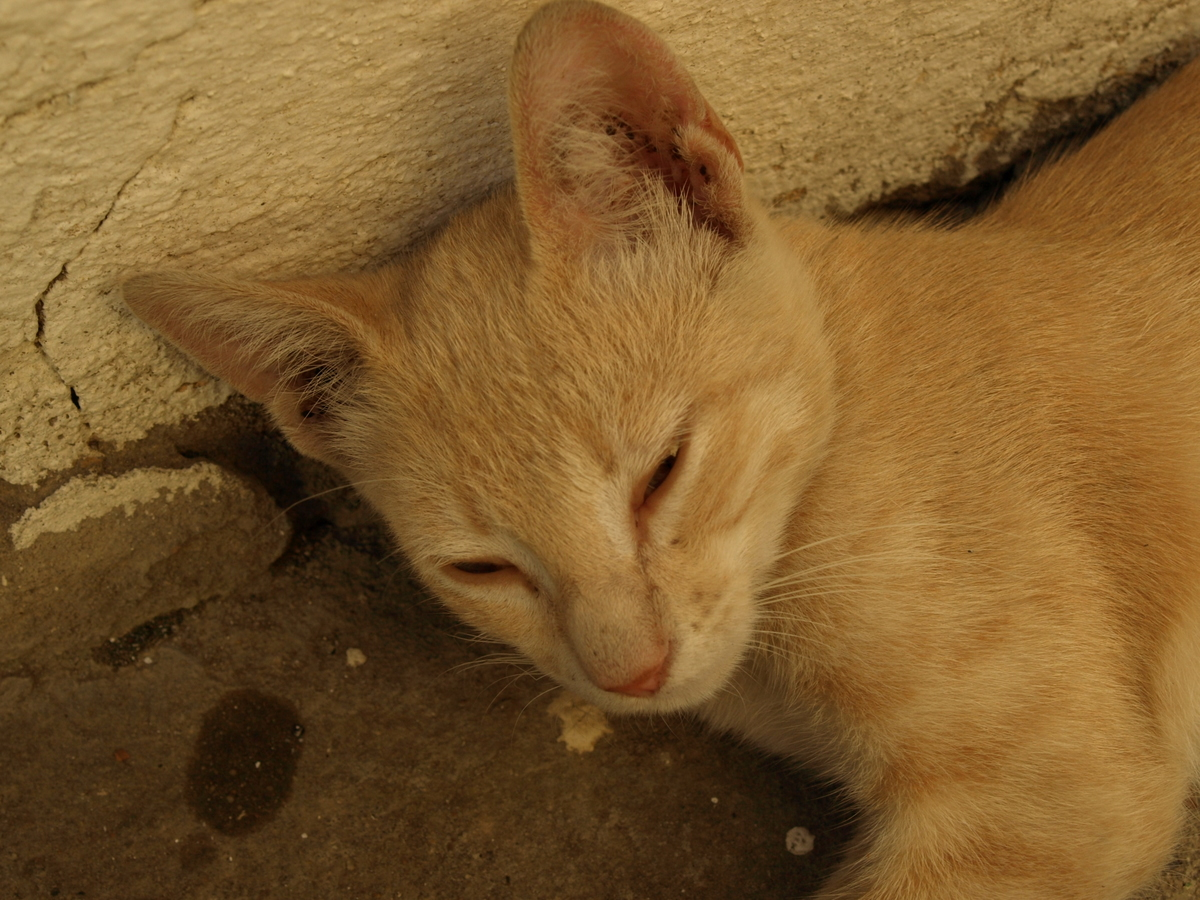 Cats in Algeria II-2