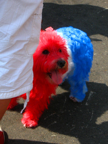Red, White & Blue Puppy 2