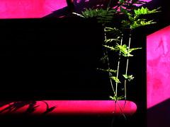 sweet green (jan janosch) Tags: urbannature minimalism freshminds camminante 3waychallenge favemoifrance ministract