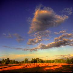 A field in summertime without hay bales (MyOakForest) Tags: summer field clouds evening abend sommer wide feld wolken summertime weite soe mywinners aplusphoto betterthangood myoakforest