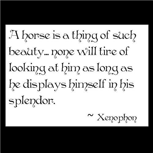 Xenophon #4