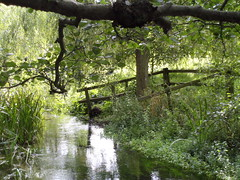 Tranquility (dkhlucy) Tags: trees love nature water beauty reflections movement stream peace looking norfolk tranquility calm thinking change ponder stillness latesummer dwell southacre