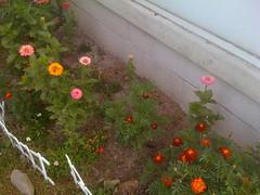 flowers, duh.