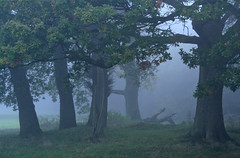 The Back Of Love (farmerytwang) Tags: uk trees mist southampton southamptoncommon