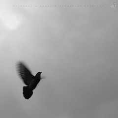 A Storm is Comming (Claudio ) Tags: blancoynegro animal canon flying paloma bn ave cielo pidgeon volar aletear