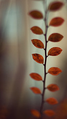 ladder (koinis) Tags: autumn red fall leaves canon john 50mm leaf dof bokeh 15 explore climbing ladder 18 koinberg koinis