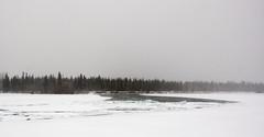 (eyebex) Tags: trees winter white snow ice water river landscape flow frozen moody open snowstorm yukon jam blizzard whitehorse icejam wonderlancanada