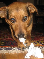 Maggie Shredding Paper Towel