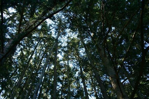 Pines Overhead: Hudson Mills Park