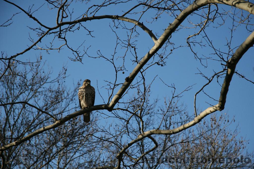 SDR Hawk 2-11-2007