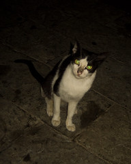 Stray cat in Casco Viejo, Panamá