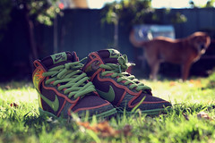 Now you tease my plug one style (margyyy) Tags: dog grass souls de la shoes soul doggie nikesb