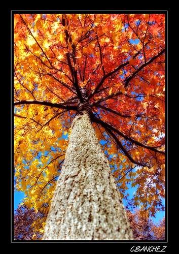 A colorful fall..