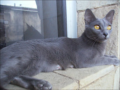 Nona (MaCaEs) Tags: blue cats baby black cute azul cat gatos babe preto gato lucky gata pepe russian fofo sorte russo russianblue nona pep gatopreto caulinha russoazul