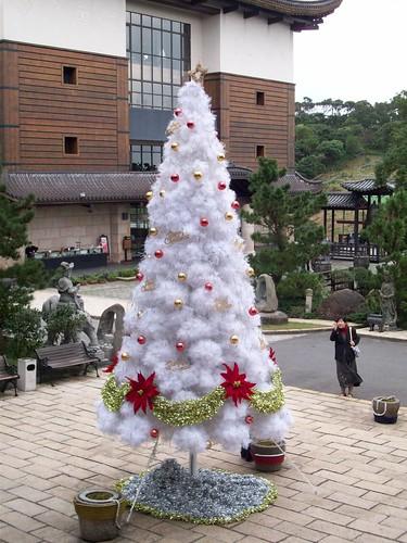 你拍攝的 白色耶誕樹。