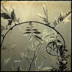 @ (*Leanda) Tags: light sky sunlight texture leaves sepia branch layer swirl infinestyle memoriesbook absolutegoldenmasterpiece