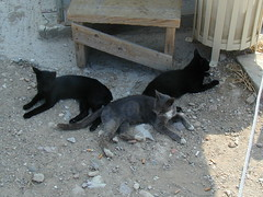 Local cats of the Acropolis