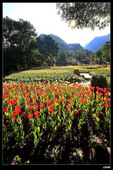 nEO_IMG_IMG_0945 (c0466art) Tags: morning pink trees light red mountain green sunshine yellow canon garden landscape nice scenery colorful village purple tulips god taiwan taoyuan 2009 famouse