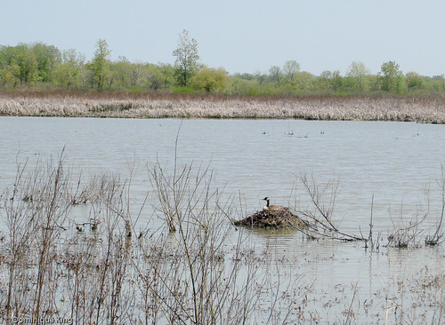 Ottawa National Wildlife Refuge, Ohio-9