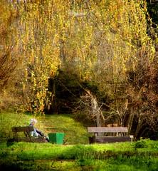 In a garden / W ogrodzie :) (raphic :)) Tags: nature garden bench branch poland polska willow botanic dmc lublin przyroda awka raphic fz8