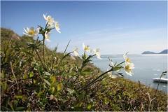 Цветистая Чукотка 8 (Магадан) Tags: anadyr chukotka анадырь чукотка чукчи луораветланы luoravetlan