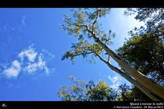 _D7B7746_bis_Monte_Pellegrino (Vater_fotografo) Tags: alberi nikon nuvole nuvola natura cielo sicilia controluce nwn alero montepellegrino ciambra nikonclubit salvatoreciambra clubitnikon vaterfotografo