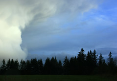 storm clouds spring (jodi_tripp) Tags: blue sky storm tree nature clouds rural landscape spring pacific northwest mother tripp jodi filed wwwjoditrippcom photographybyjodtripp