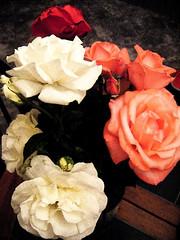 Roses In Fresco