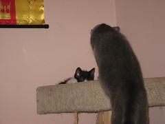 11-24-07 509 (teribul_teri) Tags: cat play kittens cuties